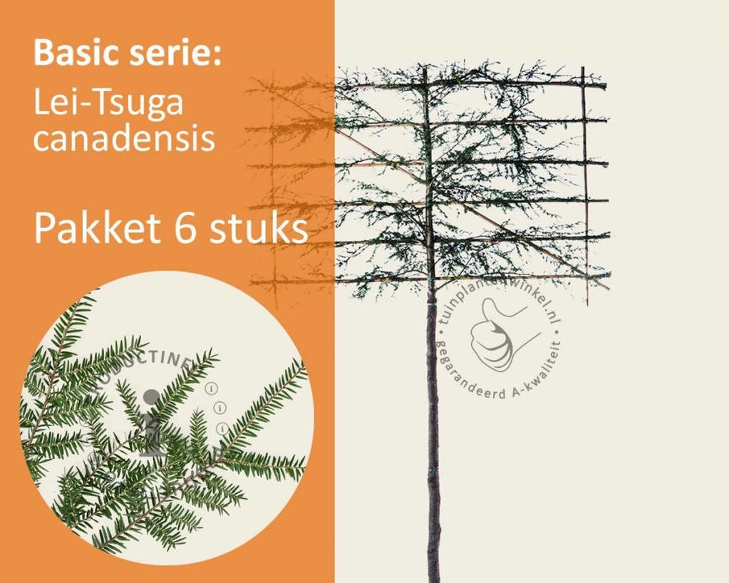 Lei-Tsuga - Basic - pakket 6 stuks + EXTRA'S!