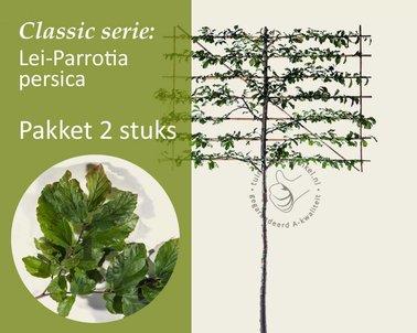 Klik hier om Lei-Parrotia - Classic - pakket 2 stuks te kopen