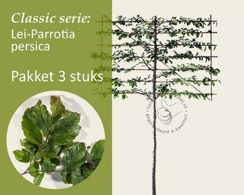 Lei-Parrotia - Classic - pakket 3 stuks + EXTRA'S!