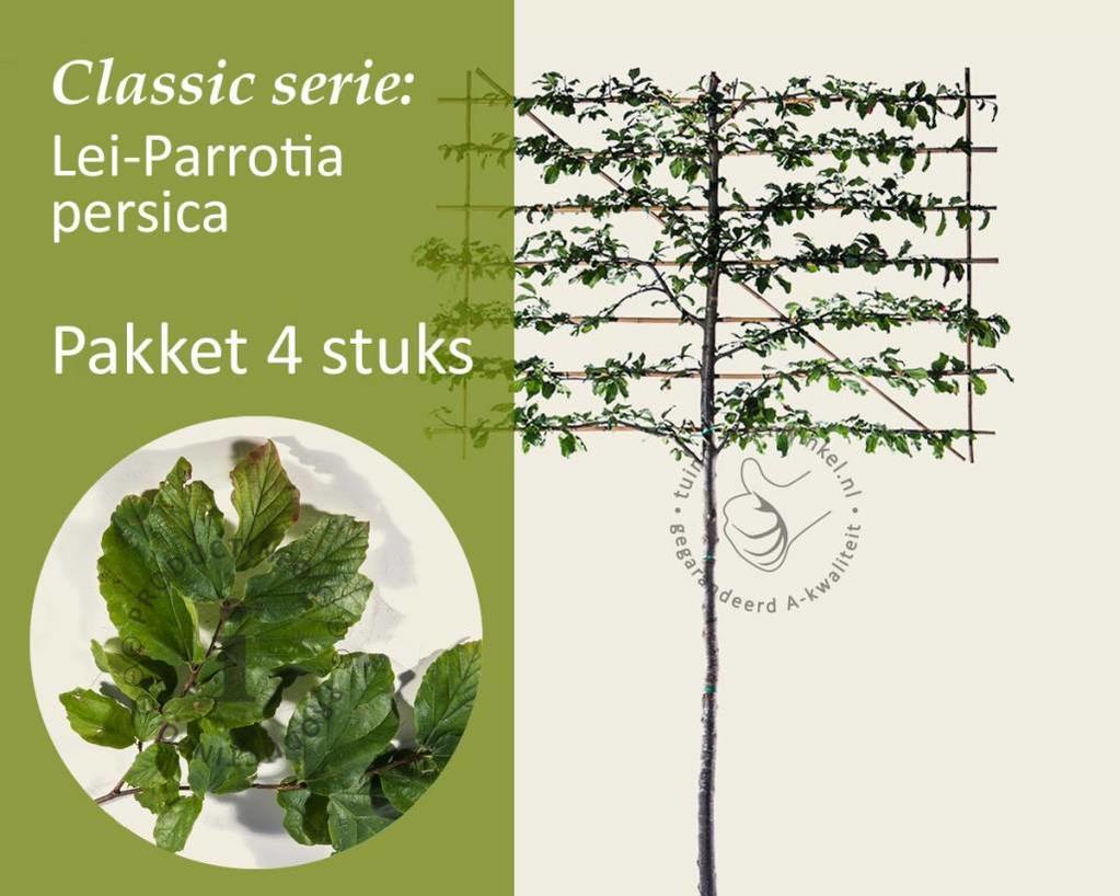 Lei-Parrotia - Classic - pakket 4 stuks + EXTRA'S!