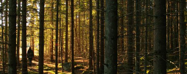 Bewoodz Holzsonnenbrillen - Sonnenbrillen aus Holz