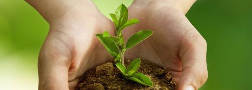 Für jede verkaufte Holz-Sonnnenbrille wird ein neuer Baum gepflanzt.