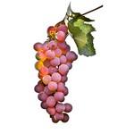 Pinot gris - Pinot Grigio