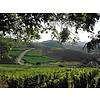 Domaine JosMeyer Pinot Blanc mise du Printemps, Biologisch
