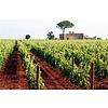 Agricole Vallone Versante Chardonnay