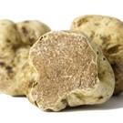 Witte truffel Tuber Magnatum Pico EXTRA