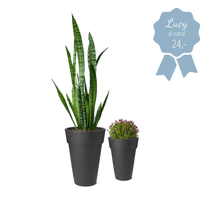 hoge design bloempotten lucy met plant