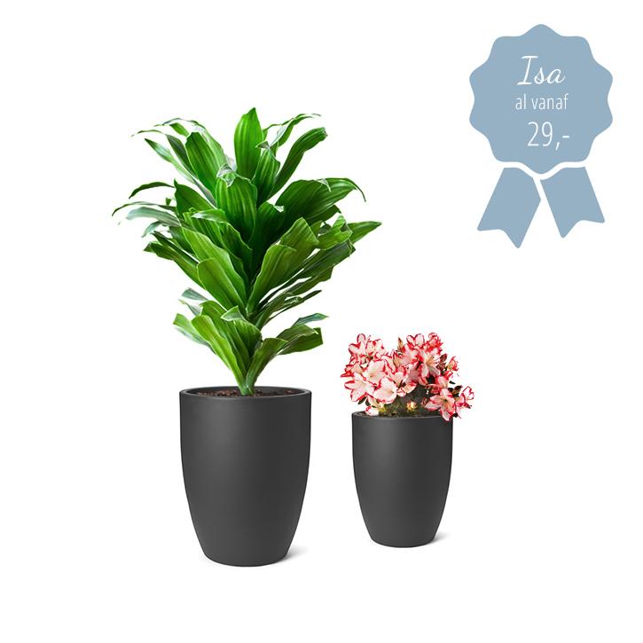 hoge bloembakken isa met plant