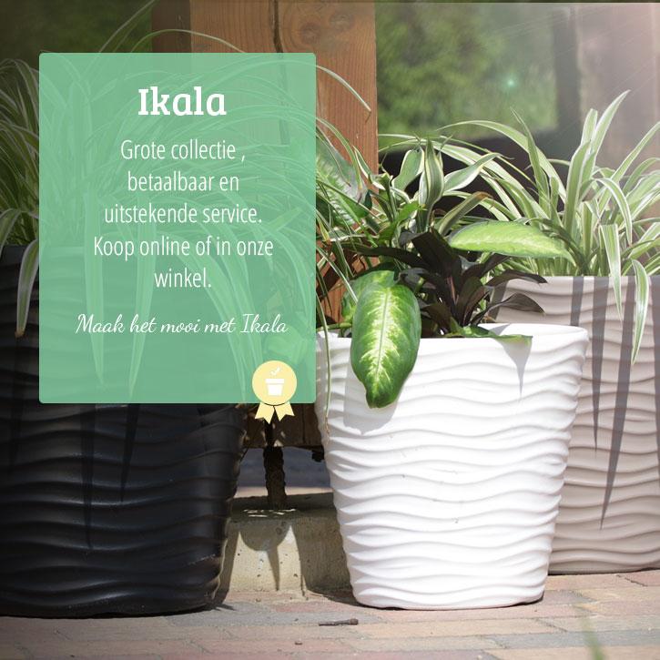 Mooie bloempotten plantenbakken voor binnen en buiten for Grote planten voor binnen