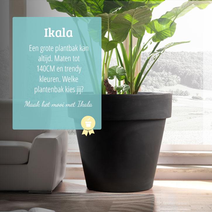 Grote plantenbakken ook xxl voor een mooie tuin ikala for Grote planten voor binnen