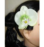 Elfen-Orchideen 2 x