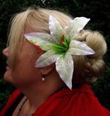 Lilie Haarblüte 2 x