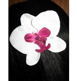 Gothic Lolita Orchideen 2 x