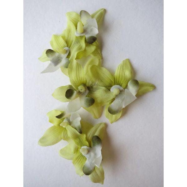 Hellgrüne Miniorchideen