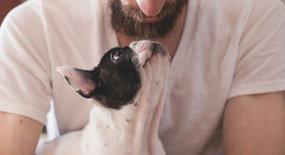 Hoe maak je jouw puppy zo snel mogelijk zindelijk?