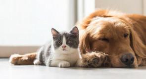 Wormen bij de hond en kat