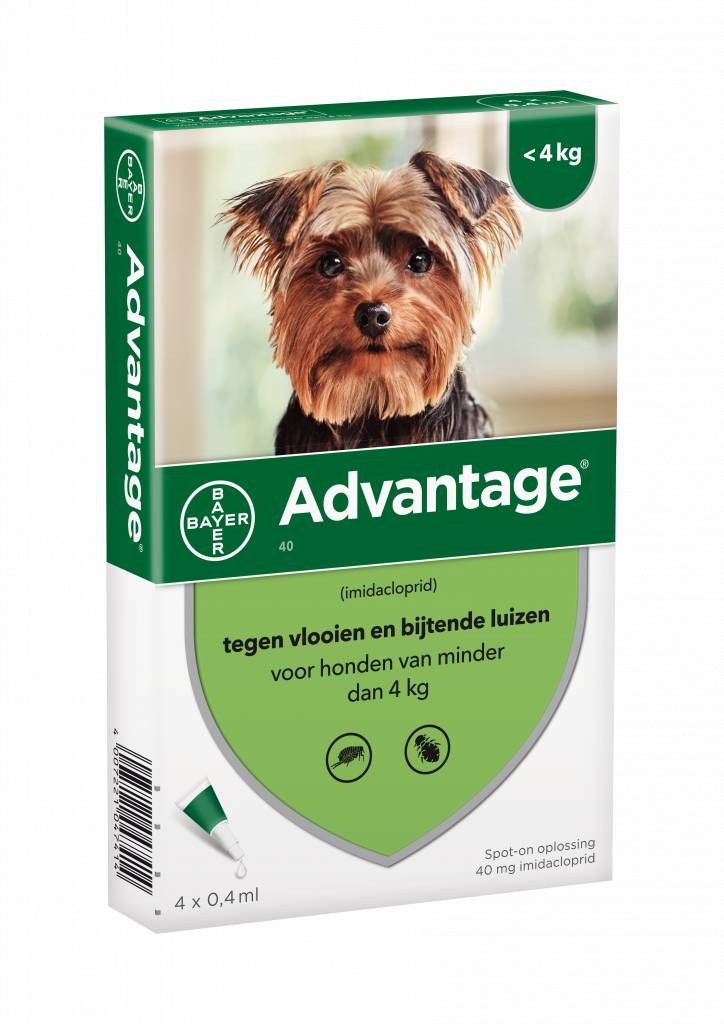 Advantage Hond