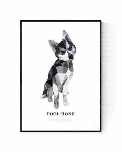 Poster poolhond