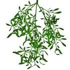 tak mistletoe glitter donkergroen