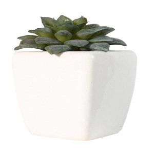 vetplant mini in wit stenen potje per 12 stuks