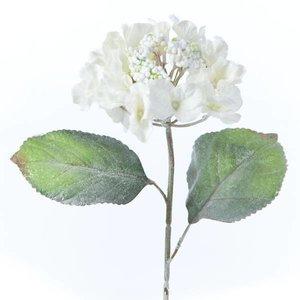 bloem wit diverse lengten