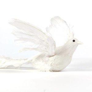 vogel wit veren groot