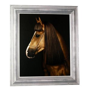 poster paard 60 x 70cm