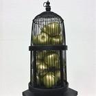 kooi zwart met gouden appels