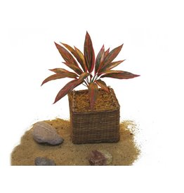 EUROPALMS EUROPALMS Dracena, red-green, 27cm