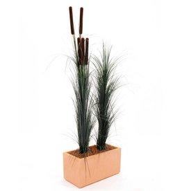 EUROPALMS EUROPALMS Reed grass with cattail, dark-green,152cm