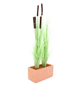 EUROPALMS EUROPALMS Reed grass cattails, light-green, 152cm
