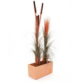 EUROPALMS EUROPALMS Reed grass cattails, light-brown, 152cm
