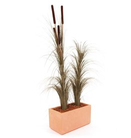 EUROPALMS EUROPALMS Reed grass cattails, dark-brown, 152cm