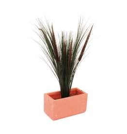 EUROPALMS EUROPALMS Fountain grass with panicles, 96cm