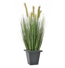 EUROPALMS EUROPALMS Watergrass in pot, 60cm