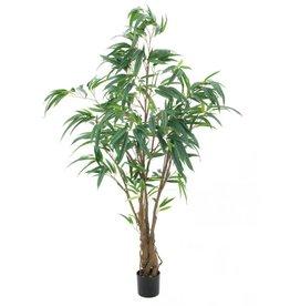 EUROPALMS EUROPALMS Ficus Longifolia, thick trunk, 180cm