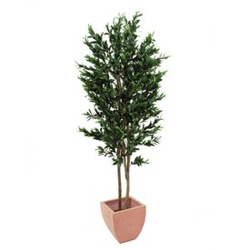EUROPALMS EUROPALMS Olive Tree with fruits, 2-trunks, 250cm