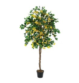 EUROPALMS EUROPALMS Bougainvillea, yellow, 180cm