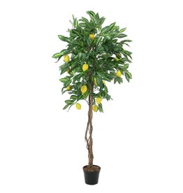 EUROPALMS EUROPALMS Lemon Tree, 180cm