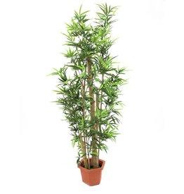 EUROPALMS EUROPALMS Bamboo natural trunks, 205cm