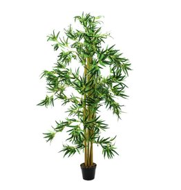 EUROPALMS EUROPALMS Bamboo multi trunk, 180cm