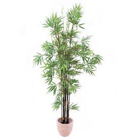 EUROPALMS EUROPALMS Bamboo black trunk, 210cm