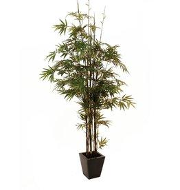 EUROPALMS EUROPALMS Bamboo black trunk, 240cm