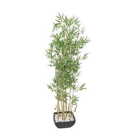 EUROPALMS EUROPALMS Bamboo in Bowl, 150cm