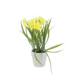 EUROPALMS EUROPALMS Daffodil, 22cm
