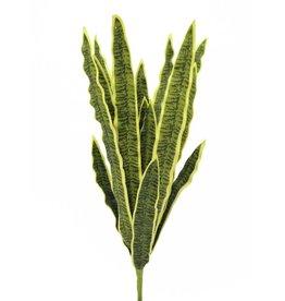 EUROPALMS EUROPALMS Sansevieria (EVA), green-yellow, 74cm