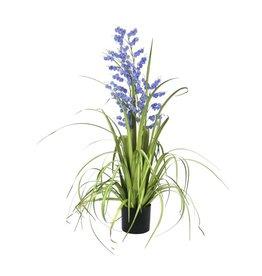 EUROPALMS EUROPALMS Bellflower, purple, 105cm