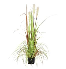 EUROPALMS EUROPALMS Wild growth, 120cm