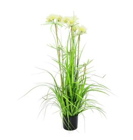 EUROPALMS EUROPALMS Star grass, 120cm