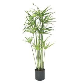 EUROPALMS EUROPALMS Cyperusgrass, 76cm